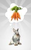 O coelho pensa Fotografia de Stock