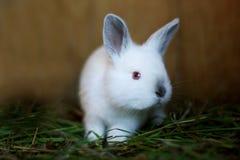 O coelho pequeno Fotos de Stock