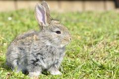 O coelho pequeno está em um pasto Imagens de Stock