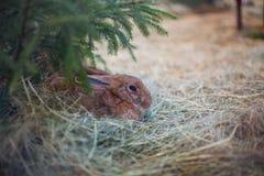 O coelho senta-se na grama Foto de Stock