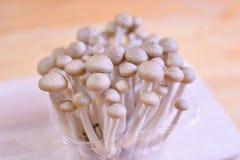 O cogumelo da faia de Brown, shimeji cresce rapidamente no pacote em de madeira Fotos de Stock Royalty Free