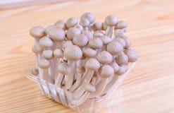 O cogumelo da faia de Brown, shimeji cresce rapidamente no pacote em de madeira Imagem de Stock Royalty Free