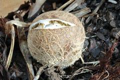 O cogumelo de bambu quebrou quando quente e seco imagem de stock royalty free