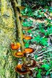 O cogumelo na paisagem do parque nacional de Sri Sat Cha Na Lai, Sukhothai, Tailândia fotos de stock