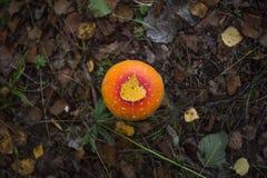 O cogumelo vermelho e alaranjado da floresta que cresce na grama, seca as folhas com a folha do vidoeiro no pileus imagens de stock royalty free