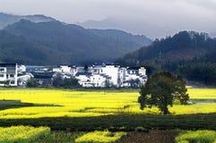 O Cole floresce a flor em Wuyuan Imagens de Stock