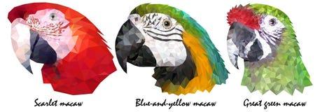 O ` colorido s do papagaio da arara três dirige a identidade visual no baixo estilo do polígono ilustração royalty free