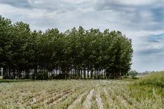 O começo de uma floresta verde foto de stock