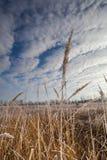 O começo do inverno Fotos de Stock Royalty Free