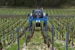 O comerciante de vinhos conduz um trator no vinhedo, França imagem de stock