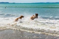 O companheiro persegue a apreciação de seu tempo na praia foto de stock