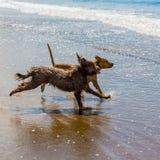 O companheiro persegue a apreciação de seu tempo na praia foto de stock royalty free
