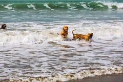 O companheiro persegue a apreciação de seu tempo na praia imagens de stock royalty free