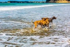 O companheiro persegue a apreciação de seu tempo na praia fotos de stock