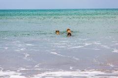O companheiro persegue a apreciação de seu tempo na praia fotos de stock royalty free