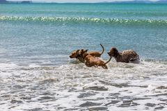 O companheiro persegue a apreciação de seu tempo na praia fotografia de stock royalty free