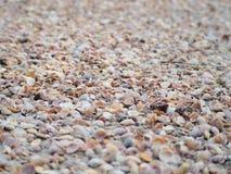 O completo de shell do mar Fotos de Stock Royalty Free