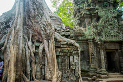 O complexo do templo de Angkor Imagem de Stock Royalty Free