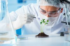 O conceito da biotecnologia com o cientista no laboratório fotografia de stock
