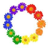 O conceito da camomila do símbolo alegre da cultura, sinal de LGBT é o isolado Fotografia de Stock
