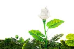 O conceito da energia, enterra a planta de ampola amigável, no branco Foto de Stock