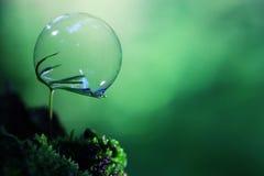 O conceito da fotossíntese imagem de stock