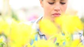 O conceito da mola, mulher no jardim toma do narciso das flores vídeos de arquivo