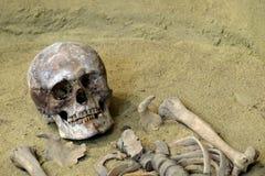 O conceito da morte e da exumação O crânio e os ossos humanos na areia Escavações Archaeological foto de stock