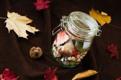 O conceito da mudança tempera o verão no frasco no ajuste do outono Imagens de Stock