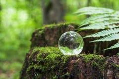 O conceito da natureza, bola de cristal verde da floresta em um coto de madeira com folhas Bola de vidro em um coto de madeira co imagens de stock