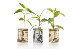 O conceito da planta verde cresce na nota da moeda do dólar americano Foto de Stock Royalty Free