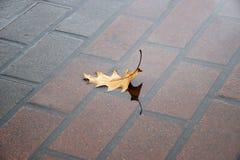 O conceito da solidão Cubra o encontro na telha molhada no st Imagens de Stock