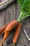 O conceito de cenouras saudáveis comer Imagem de Stock Royalty Free