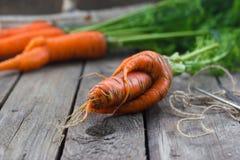 O conceito de cenouras saudáveis comer Imagens de Stock Royalty Free