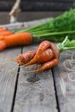 O conceito de cenouras saudáveis comer Foto de Stock Royalty Free