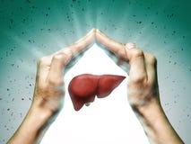 O conceito de um fígado saudável ilustração stock