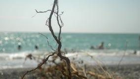 O conceito de uma campanha ambiental Close-up uma sen?o que o mar jogasse em terra durante uma tempestade No fundo filme
