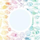 O conceito do verão com coleção original do museu do mar descasca a espécie em vias de extinção rara, contorno do arco-íris dos m ilustração stock