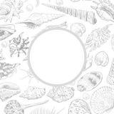 O conceito do verão com coleção original do museu do mar descasca a espécie em vias de extinção rara, contorno cinzento dos molus ilustração do vetor
