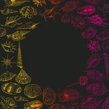 O conceito do verão com coleção original do museu do mar descasca a espécie em vias de extinção rara, contorno cor-de-rosa vermel ilustração stock