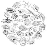 O conceito do verão com coleção original do museu do mar descasca a espécie em vias de extinção rara, contorno preto dos moluscos ilustração royalty free
