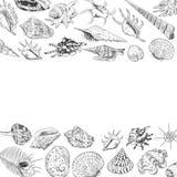 O conceito do verão com coleção original do museu do mar descasca a espécie em vias de extinção rara, contorno preto dos moluscos ilustração stock