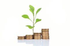 O conceito financeiro do crescimento, empilha a moeda dourada Fotografia de Stock
