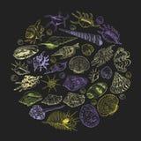 O conceito redondo do verão da composição com coleção original do museu do mar descasca a espécie em vias de extinção rara, roxo  ilustração stock