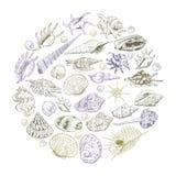 O conceito redondo do verão da composição com coleção original do museu do mar descasca a espécie em vias de extinção rara, roxo  ilustração do vetor