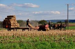 O Condado de Lancaster, PA: Campos de trabalho de Amish fotografia de stock