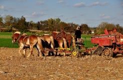 O Condado de Lancaster, PA: Mulher de Amish com a equipe dos cavalos imagem de stock