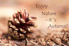 O cone de abeto com as palavras aprecia a natureza, seu outono Fotografia de Stock Royalty Free