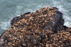 O conjunto de leões de mar aproxima cavernas dos leões de mar, Oregon Foto de Stock