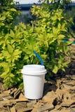 O copo de papel do café está perto do arbusto verde em uma luz do dia fotos de stock
